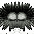 Black And White Petals by Heather Joyce Morrill