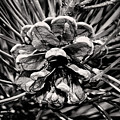 Black And White Pine Cone Wall Art by Gwen Gibson