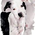 Black And White Pit by Debra Jones