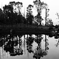 Black And White Reflected by Lauren Bucke