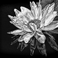 Black And White Reflection by Judy Vincent
