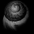 Black And White Shell Art by Prar Kulasekara