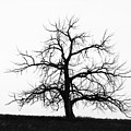 Black And White Single Tree by Mike Loudermilk