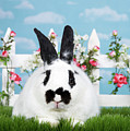 Black And White Spring Bunny by Sheila Fitzgerald