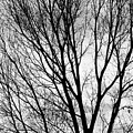Black And White Tree Branches Silhouette by James BO Insogna