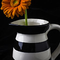 Black And White Vase With Daisy by Garry Gay