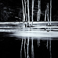 Black And White Winter Thaw Relections by Tom Singleton