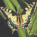 Black And Yellow Butterfly by William Bowers
