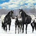Black Appaloosa Horses In Winter Pasture by Crista Forest