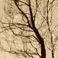 Black Autumn by Jon Benson