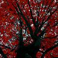 Black Bark Red Tree by David Lee Thompson