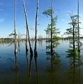 Black Bayou Lake 2 by Megan Joffrion