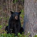 Black Bear by Brenda Jacobs