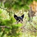 Black Bear Cub by Sheryl Saxton