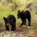 Black Bear Cubs by Sheryl Saxton