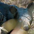 Black Bear Oh My by Betsy Knapp