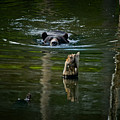 Black Bear Pictures 104 by World Wildlife Photography