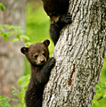Black Bear Pictures 84 by World Wildlife Photography
