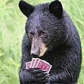 Black Bear Says I Call  by Timothy Flanigan