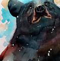 Black Bear by Sean Parnell