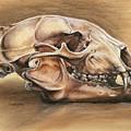 Black Bear Skull by Darlene Watters