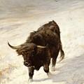 Black Beast Wanderer  by Joseph Denovan Adam