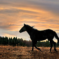 Black Beauty At Sunset by Leland D Howard