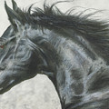 Black Beauty by Paul Archer