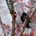 Black Bird by Gunay Turgut