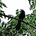 Black Bird Sings by Theresa Campbell