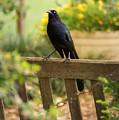 Black Bird by Stacie Paris