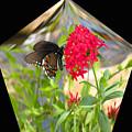 Black Butterfly In A Diamond by Rosalie Scanlon