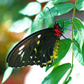 Black Butterfly by Smilin Eyes  Treasures