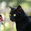 Black Cat And Butterfly by Janet Argenta