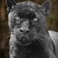 Black Cat by Charles McKelroy