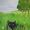 Black Cat In A Meadow by Karen Jane Jones