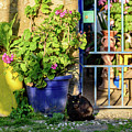 Black Cat In Courtyard In Rhodes Town, Rhodes, Greece by Global Light Photography - Nicole Leffer