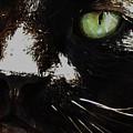 'black Cat' by Paula  Heffel