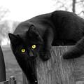 Black Cat by Thomas Blackwood