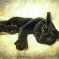 Black Cat Yellow Eyes by Joann Vitali