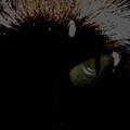 'black Cats Eye' by Paula  Heffel