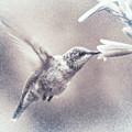 Black-chinned Hummingbird by Carol Fox Henrichs