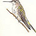 Black Chinned Hummingbird by Michael Vigliotti