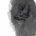 Black Cornish Rex No 04 by Maria Astedt