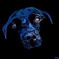 Black Dog by Jann Paxton