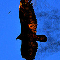 Black Eagles Vision by David Lee Thompson