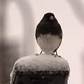 Black Eyed by Linda Kerkau