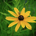 Black Eyed Susan And Friends by Teresa A and Preston S Cole Photography