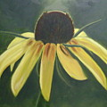 Black Eyed Susan by Toni Berry