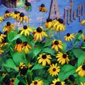 Black-eyed Susans At The Bag Factory by Sandy MacGowan